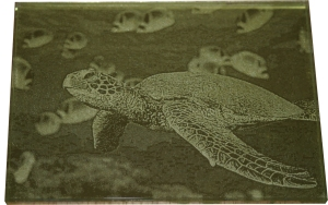 Gold_leaf_turtle